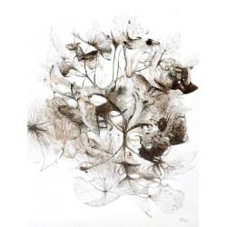 Flore singulière